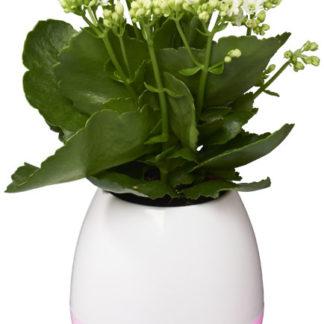 Green Thumb Flower Pot  Bluetooth® högtalare