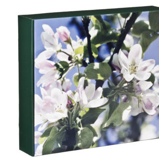 Presentkartong Äppelblom