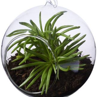 Sphere växthus